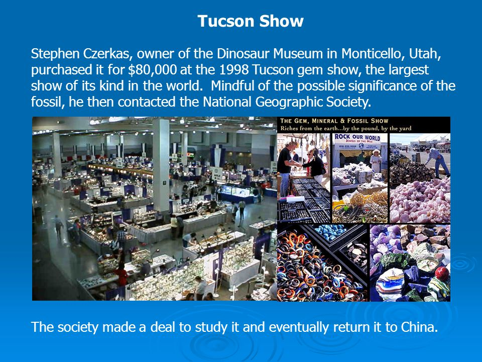 Stephen Czerkas, owner of the Dinosaur Museum in Monticello, Utah, purchased it for $80,000 at the 1998 Tucson gem show, the largest show of its kind
