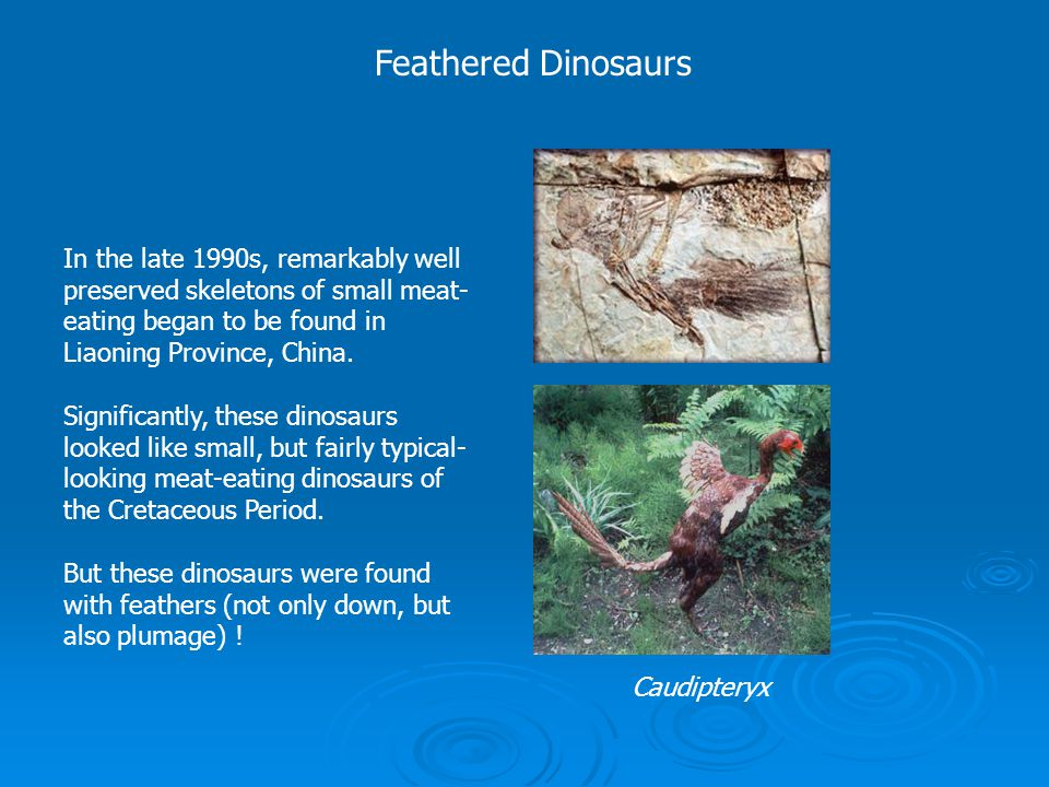 Feathered Dinosaurs In the late 1990s, remarkably well preserved skeletons of small meat- eating began to be found in Liaoning Province, China. Signif