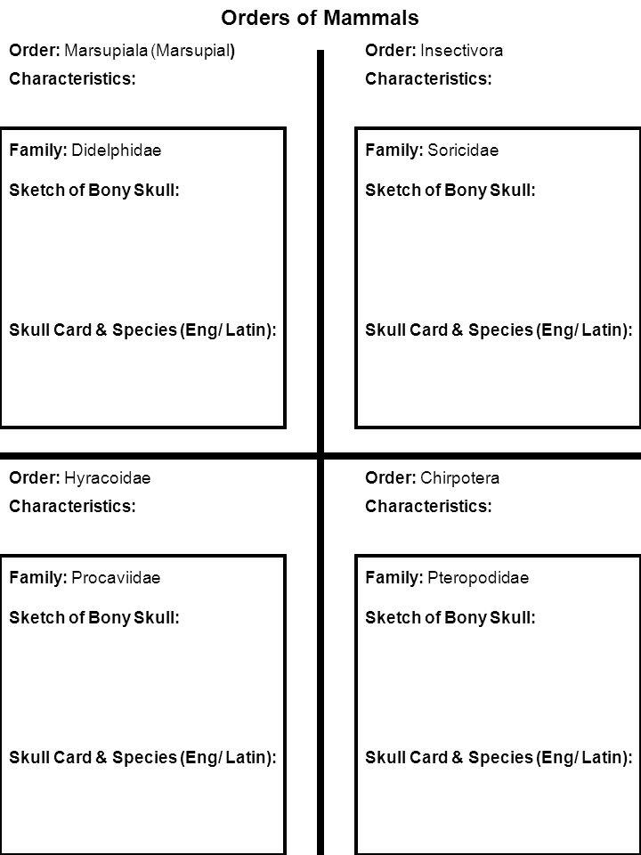 Orders of Mammals Order: Marsupiala (Marsupial) Characteristics: Order: Insectivora Characteristics: Family: Soricidae Sketch of Bony Skull: Skull Card & Species (Eng/ Latin): Family: Didelphidae Sketch of Bony Skull: Skull Card & Species (Eng/ Latin): Order: Chirpotera Characteristics: Family: Pteropodidae Sketch of Bony Skull: Skull Card & Species (Eng/ Latin): Order: Hyracoidae Characteristics: Family: Procaviidae Sketch of Bony Skull: Skull Card & Species (Eng/ Latin):