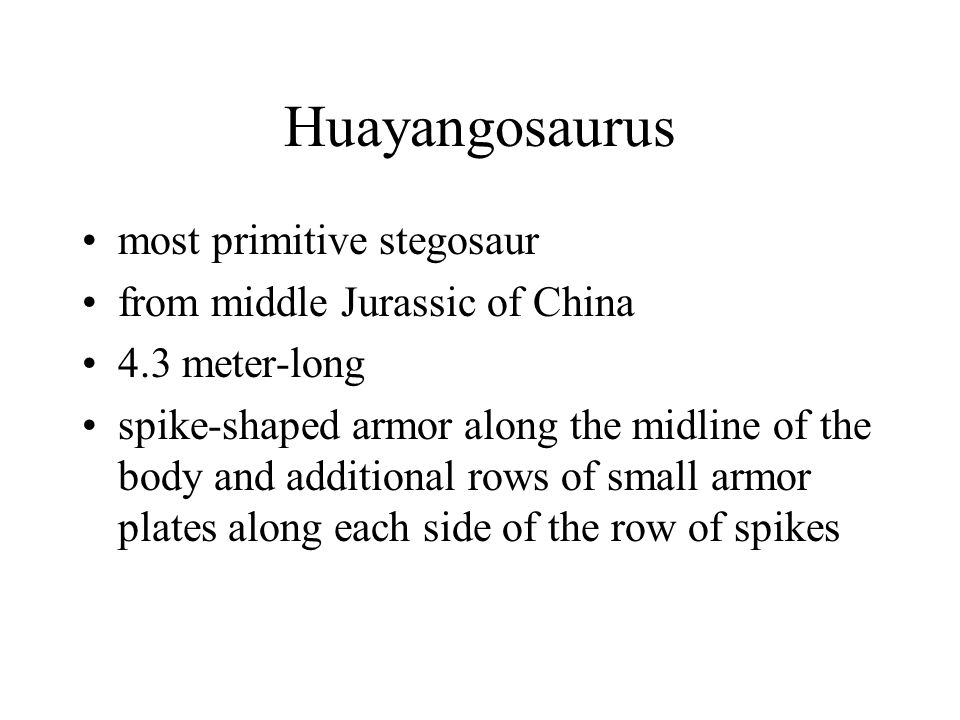 Huayangosaurus most primitive stegosaur from middle Jurassic of China 4.3 meter-long spike-shaped armor along the midline of the body and additional r