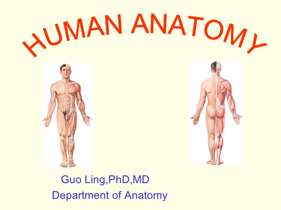Guo Ling,PhD,MD Department of Anatomy