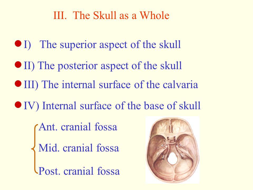 III. The Skull as a Whole I) The superior aspect of the skull II) The posterior aspect of the skull III) The internal surface of the calvaria IV) Inte