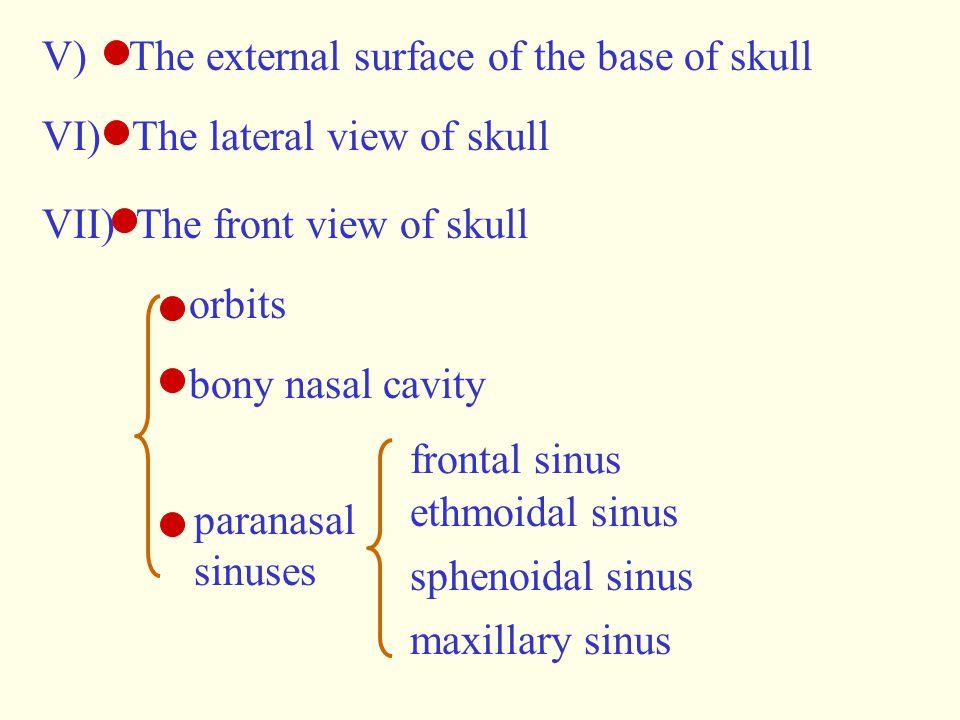 V) The external surface of the base of skull VI) The lateral view of skull VII) The front view of skull orbits bony nasal cavity paranasal sinuses fro