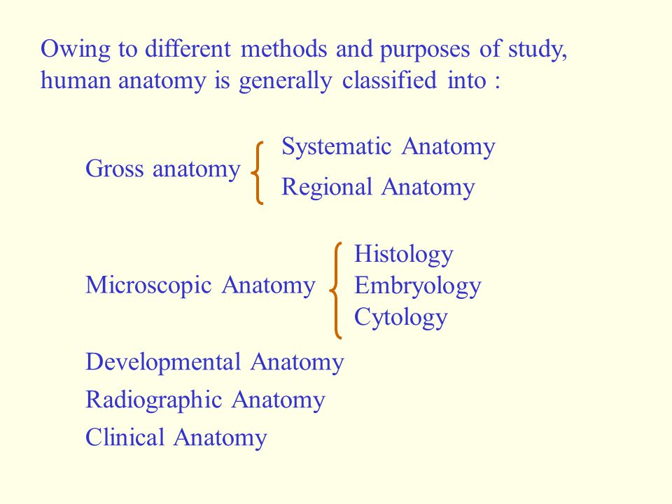 Owing to different methods and purposes of study, human anatomy is generally classified into : Gross anatomy Developmental Anatomy Radiographic Anatom