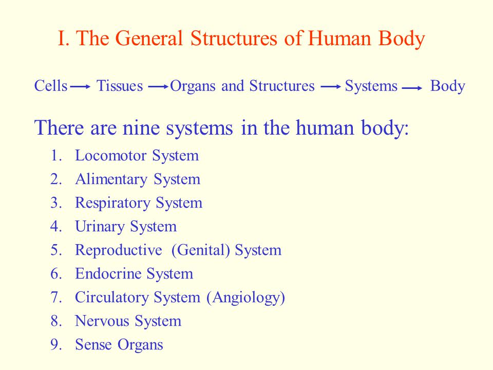 I. The General Structures of Human Body CellsTissuesOrgans and StructuresSystemsBody There are nine systems in the human body: 1.Locomotor System 2.Al