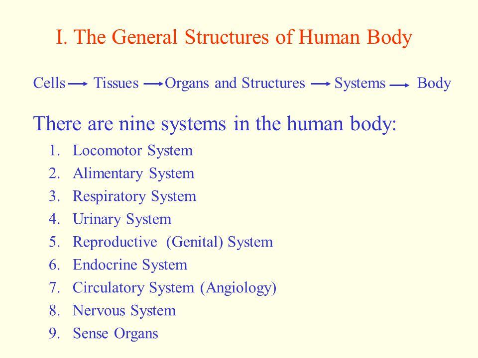 II.Basic concepts of anatomy I).