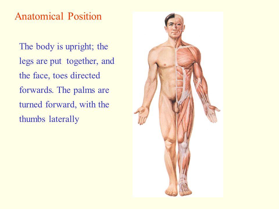 Regions of Body Anterior viewPosterior view Head Face Neck Thorax Abdomen Back Upper limb Lower limb
