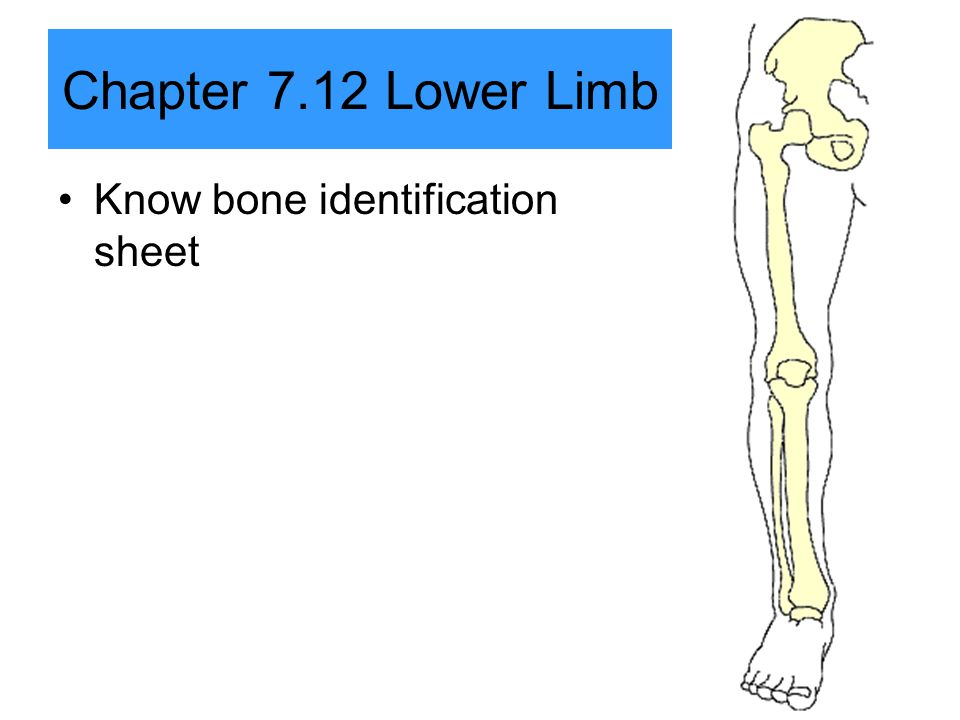 Chapter 7.12 Lower Limb Know bone identification sheet