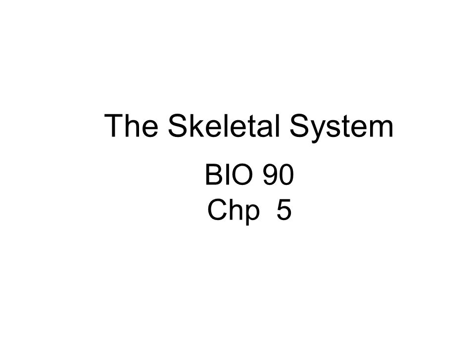 The Skeletal System (e)