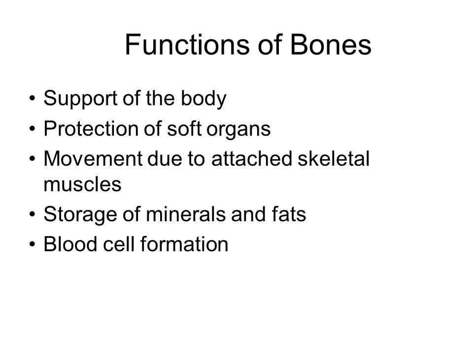 Changes in the Human Skeleton In embryos, the skeleton is primarily hyaline cartilage During development, much of this cartilage is replaced by bone Cartilage remains in isolated areas –Bridge of the nose –Parts of ribs –Joints