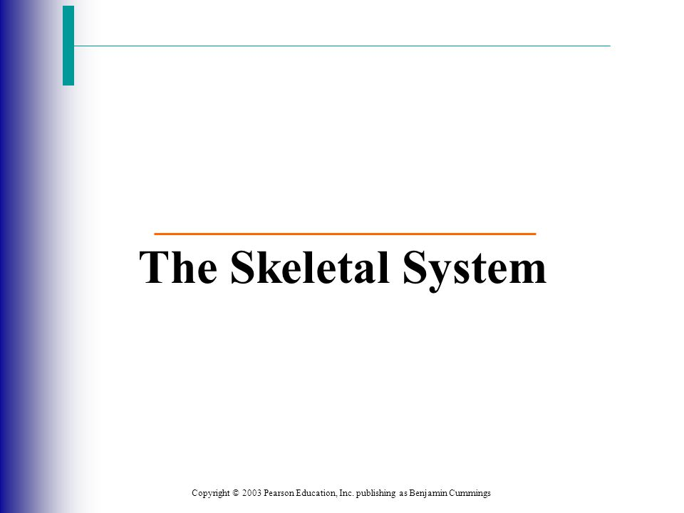 Copyright © 2003 Pearson Education, Inc. publishing as Benjamin Cummings The Skeletal System