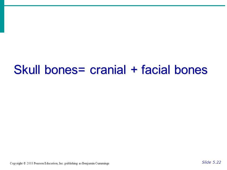 Skull bones= cranial + facial bones Slide 5.22 Copyright © 2003 Pearson Education, Inc.