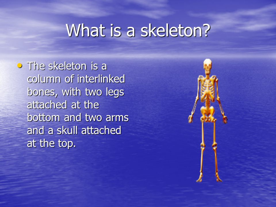 What is a skeleton.