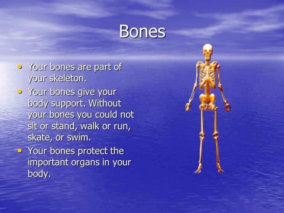 Bones Your bones are part of your skeleton.Your bones are part of your skeleton.