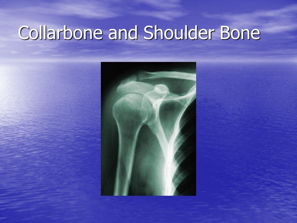 Collarbone and Shoulder Bone
