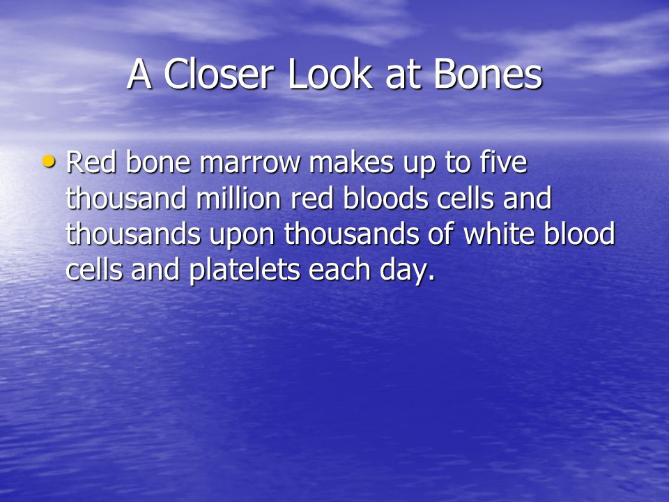 A Closer Look at Bones Red bone marrow makes up to five thousand million red bloods cells and thousands upon thousands of white blood cells and platelets each day.