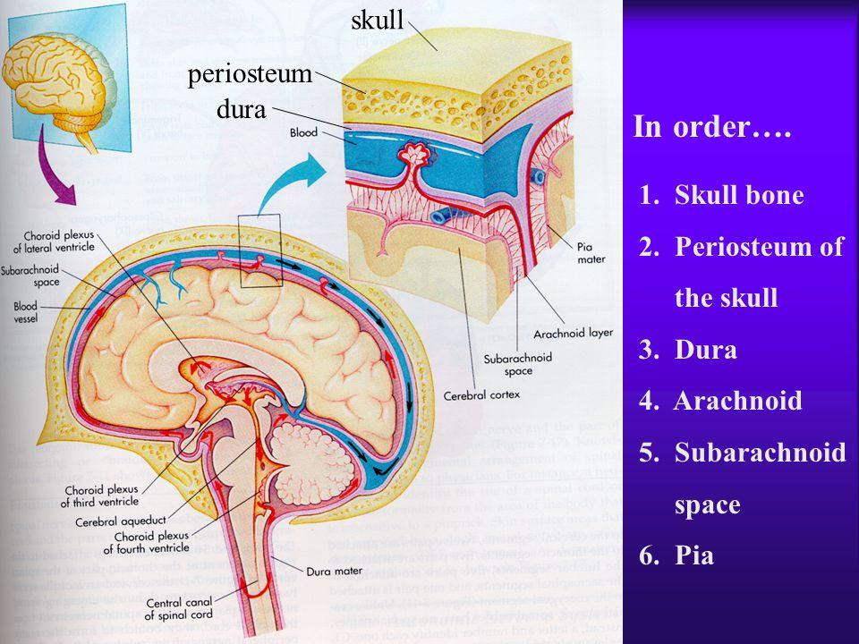 1. Skull bone 2. Periosteum of the skull 3. Dura 4. Arachnoid 5. Subarachnoid space 6. Pia In order…. skull periosteum dura