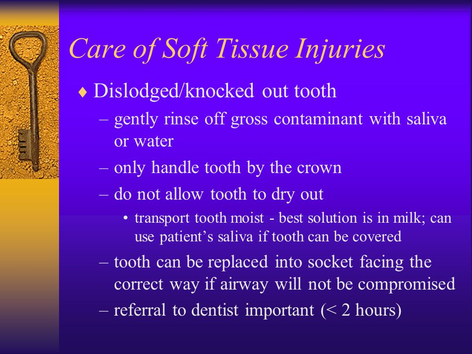 Care of Soft Tissue Injuries  Dislodged/knocked out tooth –gently rinse off gross contaminant with saliva or water –only handle tooth by the crown –do not allow tooth to dry out transport tooth moist - best solution is in milk; can use patient's saliva if tooth can be covered –tooth can be replaced into socket facing the correct way if airway will not be compromised –referral to dentist important (< 2 hours)
