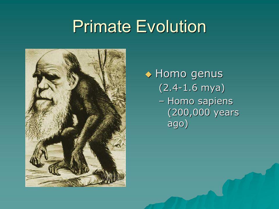 Primate Evolution  Homo genus (2.4-1.6 mya) –Homo sapiens (200,000 years ago)