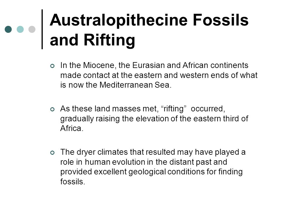 Australopithecine Fossils and Rifting In the Miocene, the Eurasian and African continents made contact at the eastern and western ends of what is now
