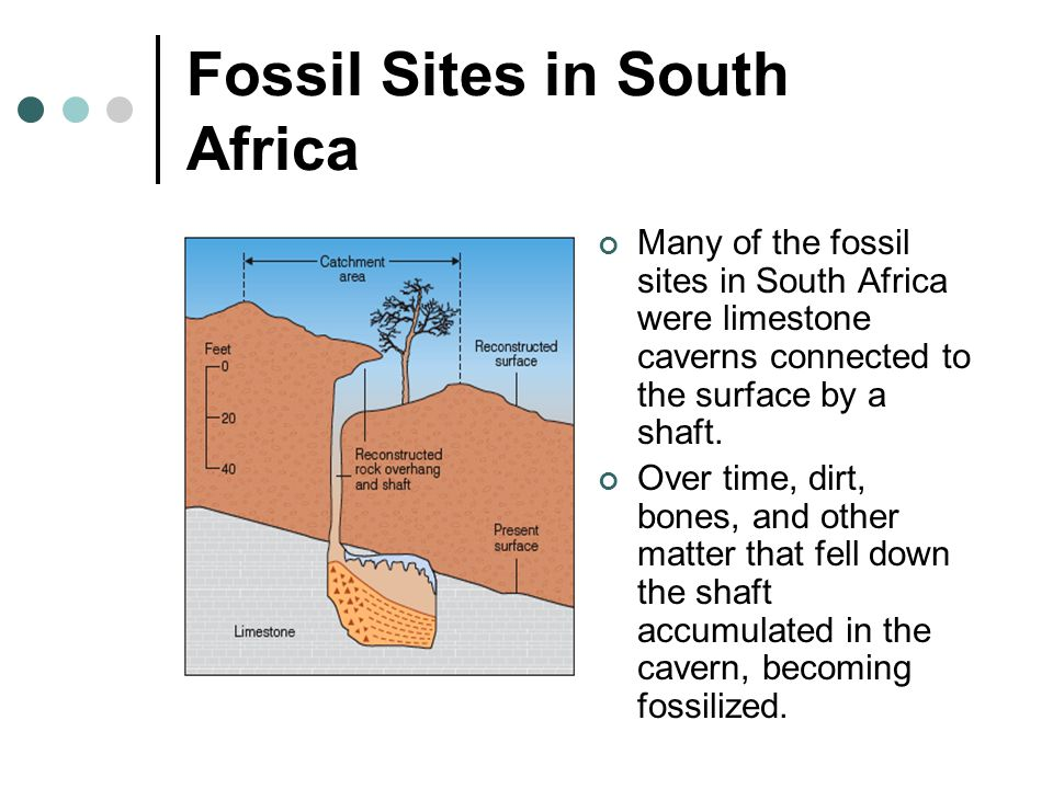 Fossil Sites in South Africa Many of the fossil sites in South Africa were limestone caverns connected to the surface by a shaft. Over time, dirt, bon