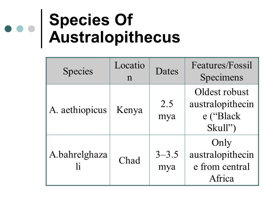 "Species Of Australopithecus Species Locatio n Dates Features/Fossil Specimens A. aethiopicusKenya 2.5 mya Oldest robust australopithecin e (""Black Sku"