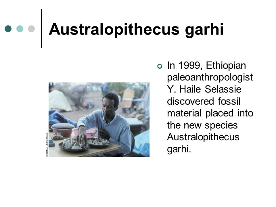 Australopithecus garhi In 1999, Ethiopian paleoanthropologist Y. Haile Selassie discovered fossil material placed into the new species Australopithecu