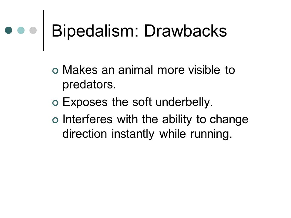 Bipedalism: Drawbacks Makes an animal more visible to predators. Exposes the soft underbelly. Interferes with the ability to change direction instantl
