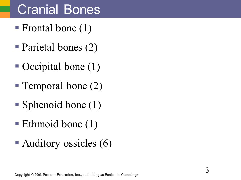 Copyright © 2006 Pearson Education, Inc., publishing as Benjamin Cummings 3 Cranial Bones  Frontal bone (1)  Parietal bones (2)  Occipital bone (1)