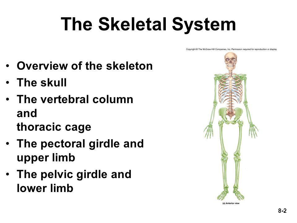 8-33 The Vertebral Column 33 vertebrae and intervertebral discs of fibrocartilage Five vertebral groups –7 cervical in the neck –12 thoracic in the chest –5 lumbar in lower back –5 fused sacral –4 fused coccygeal Variations in number of lumbar and sacral vertebrae