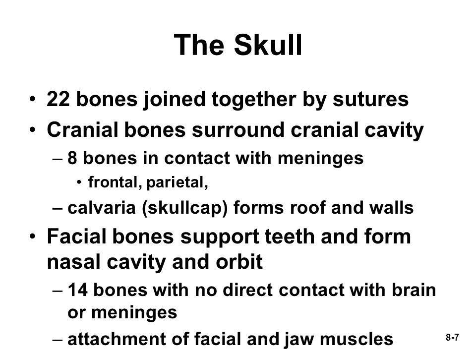 8-58 Carpal Bones Form wrist –flexion, extension, abduction and adduction 2 rows (4 bones each) –proximal row = scaphoid, lunate, triquetrum and pisiform –distal row = trapezium, trapezoid, capitate and hamate