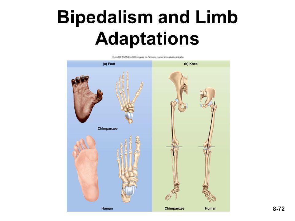 8-72 Bipedalism and Limb Adaptations