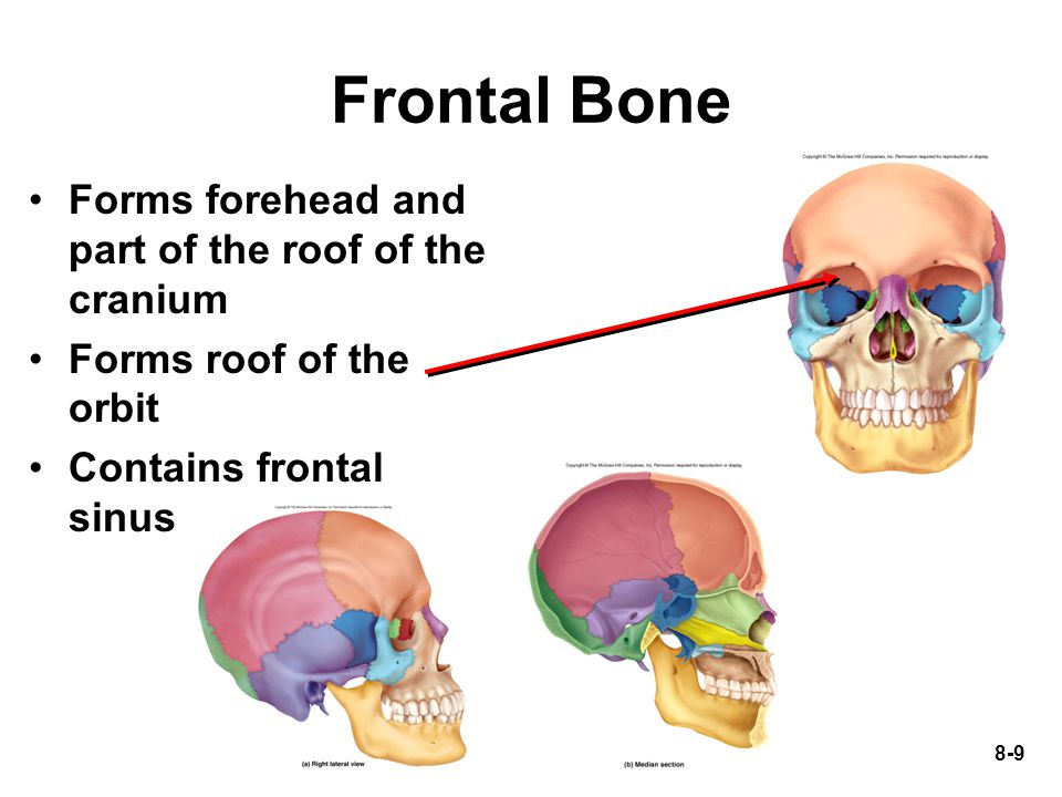 8-50 True and False Ribs True ribs (1 to 7) attach to sternum with hyaline cartilage False ribs (8-12) –11-12 are floating and not attached to sternum 12 pairs of ribs in both sexes