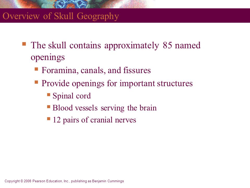 Copyright © 2008 Pearson Education, Inc., publishing as Benjamin Cummings Overview of Skull Geography  The skull contains approximately 85 named openings  Foramina, canals, and fissures  Provide openings for important structures  Spinal cord  Blood vessels serving the brain  12 pairs of cranial nerves