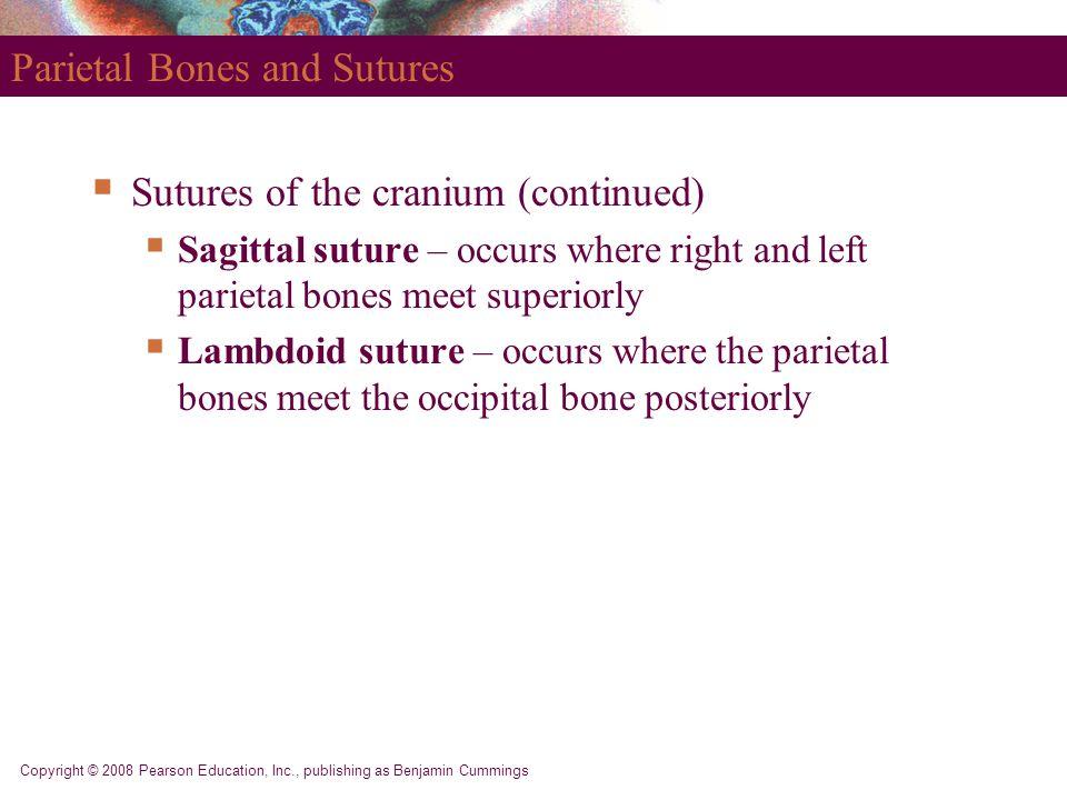 Copyright © 2008 Pearson Education, Inc., publishing as Benjamin Cummings Parietal Bones and Sutures  Sutures of the cranium (continued)  Sagittal s