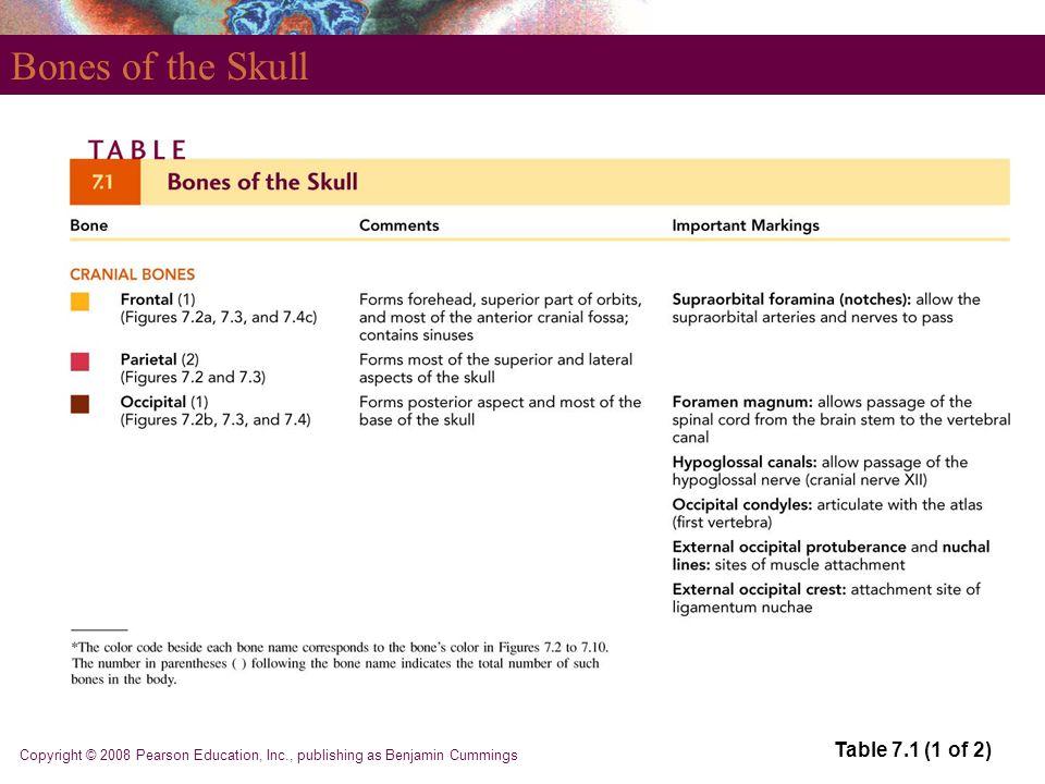 Copyright © 2008 Pearson Education, Inc., publishing as Benjamin Cummings Bones of the Skull Table 7.1 (1 of 2)
