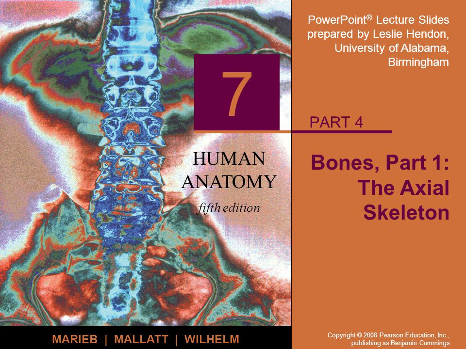 PowerPoint ® Lecture Slides prepared by Leslie Hendon, University of Alabama, Birmingham HUMAN ANATOMY fifth edition MARIEB | MALLATT | WILHELM 7 Copyright © 2008 Pearson Education, Inc., publishing as Benjamin Cummings Bones, Part 1: The Axial Skeleton PART 4