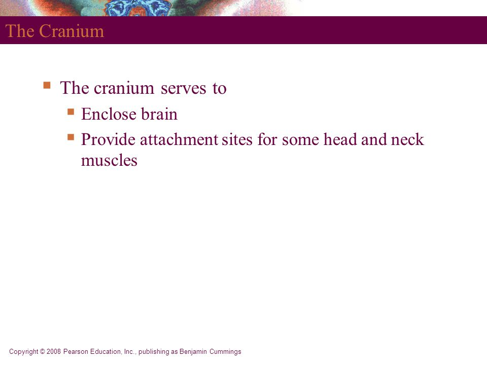 Copyright © 2008 Pearson Education, Inc., publishing as Benjamin Cummings The Cranium  The cranium serves to  Enclose brain  Provide attachment sites for some head and neck muscles