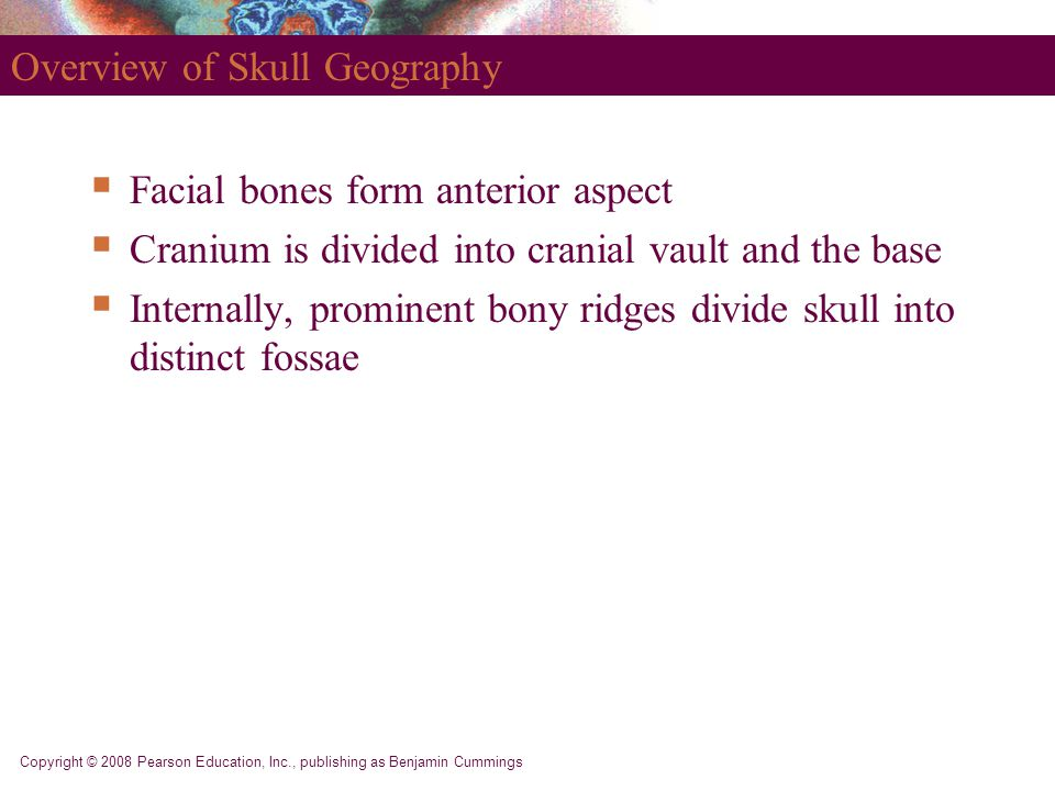 Copyright © 2008 Pearson Education, Inc., publishing as Benjamin Cummings Overview of Skull Geography  Facial bones form anterior aspect  Cranium is divided into cranial vault and the base  Internally, prominent bony ridges divide skull into distinct fossae