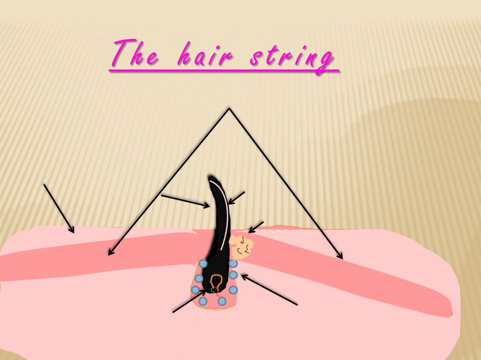 The hair string