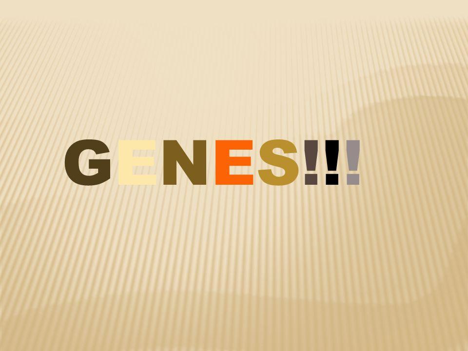 GENES!!!GENES!!!