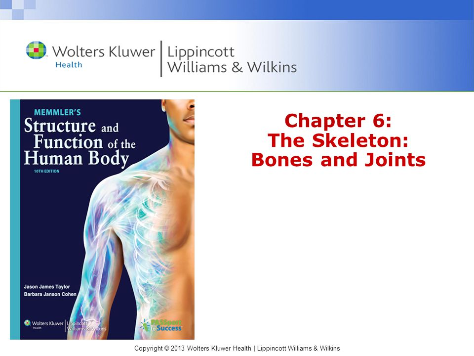 Copyright © 2013 Wolters Kluwer Health | Lippincott Williams & Wilkins Cohen: Memmler's The Human Body in Health and Disease The Skeleton The skeletal system is made up of bones, joints, and supporting connective tissue.