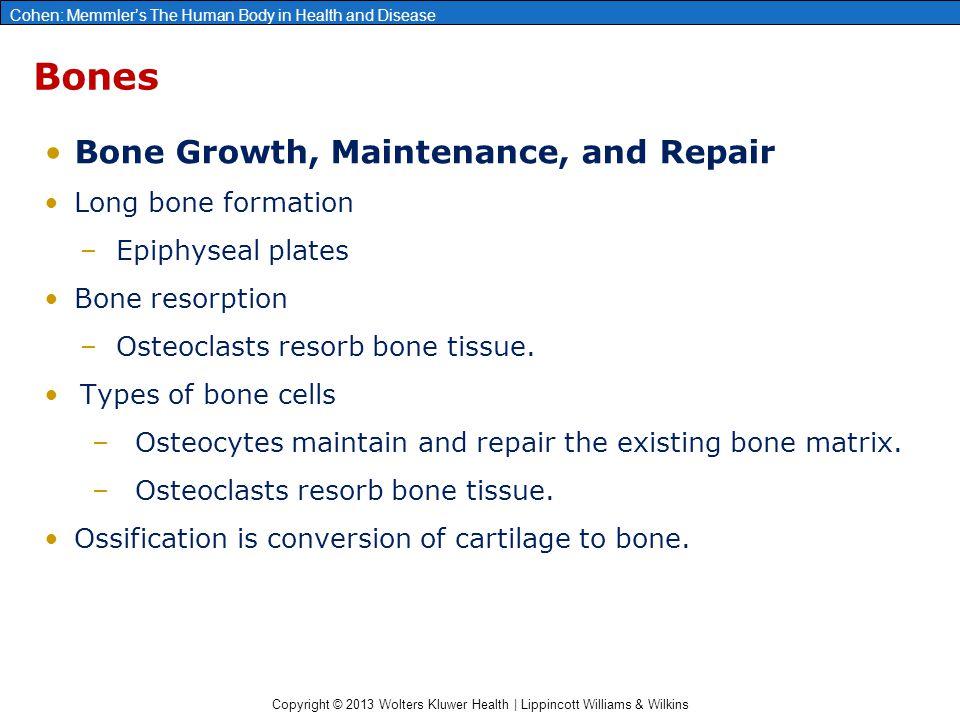Copyright © 2013 Wolters Kluwer Health | Lippincott Williams & Wilkins Cohen: Memmler's The Human Body in Health and Disease Bones Bone Growth, Mainte