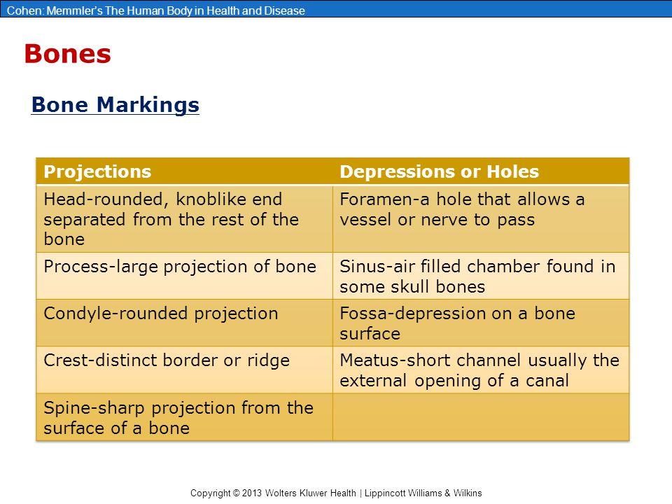 Copyright © 2013 Wolters Kluwer Health | Lippincott Williams & Wilkins Cohen: Memmler's The Human Body in Health and Disease Bones Bone Markings