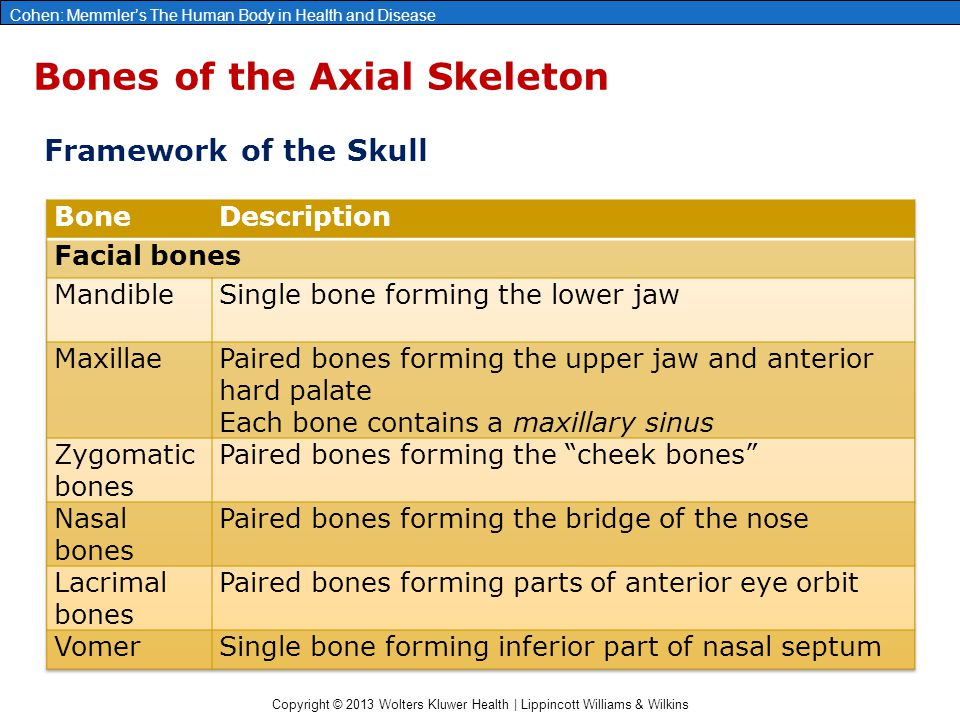 Copyright © 2013 Wolters Kluwer Health | Lippincott Williams & Wilkins Cohen: Memmler's The Human Body in Health and Disease Bones of the Axial Skelet