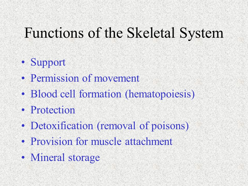 Functions of the Skeletal System Support Permission of movement Blood cell formation (hematopoiesis) Protection Detoxification (removal of poisons) Pr