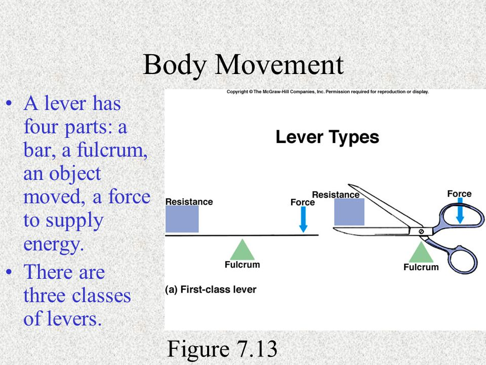 Body Movement A lever has four parts: a bar, a fulcrum, an object moved, a force to supply energy. There are three classes of levers. Figure 7.13