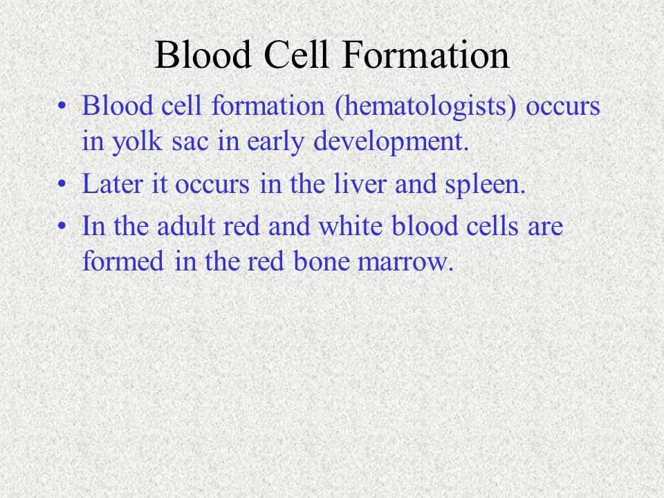 Blood Cell Formation Blood cell formation (hematologists) occurs in yolk sac in early development. Later it occurs in the liver and spleen. In the adu