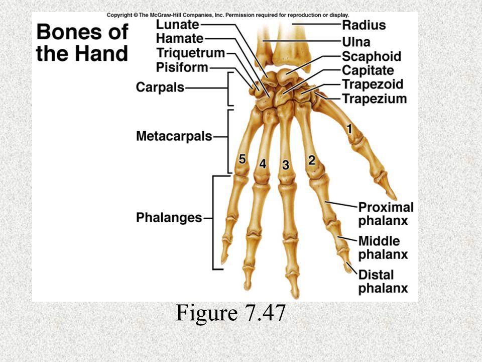 Figure 7.47