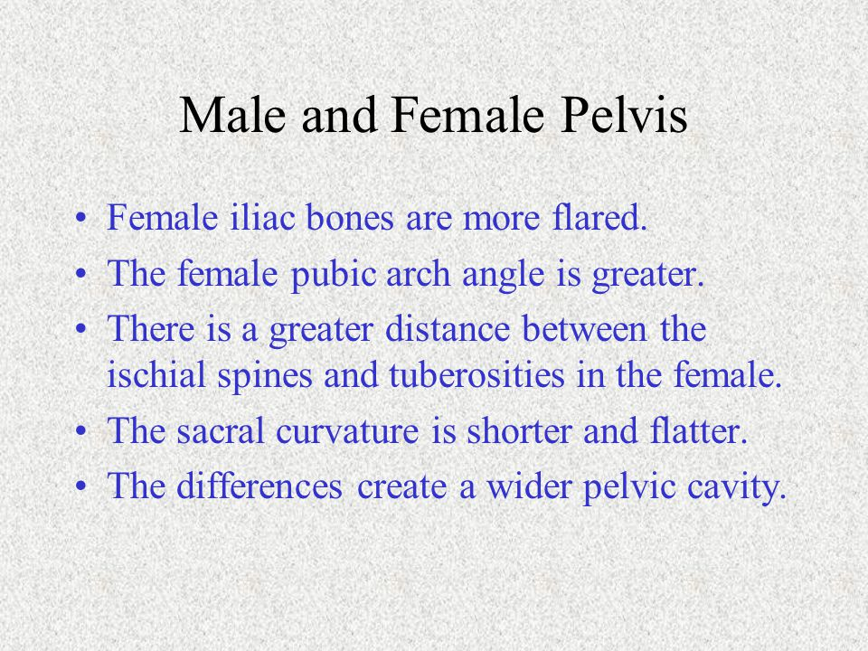 Male and Female Pelvis Female iliac bones are more flared. The female pubic arch angle is greater. There is a greater distance between the ischial spi